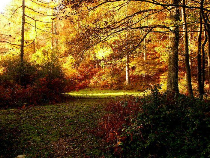 Luz-y-bosque-a17963018